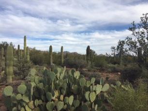 desert museum flora